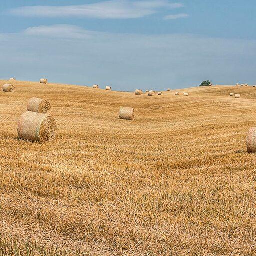 В полях Южной Моравии.