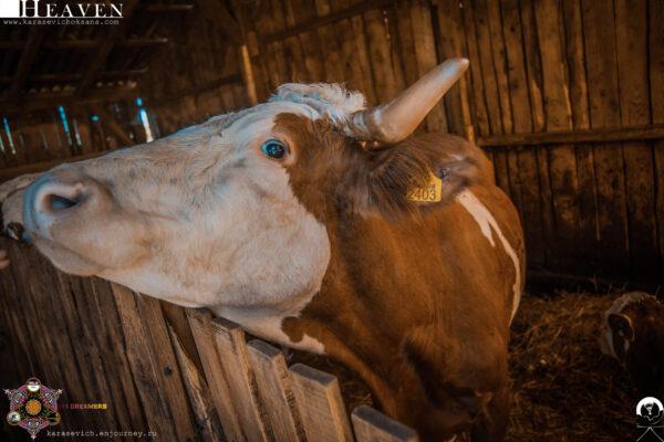 Четыре колеса идве головы: Белград— Черногория навелосипеде. часть 1
