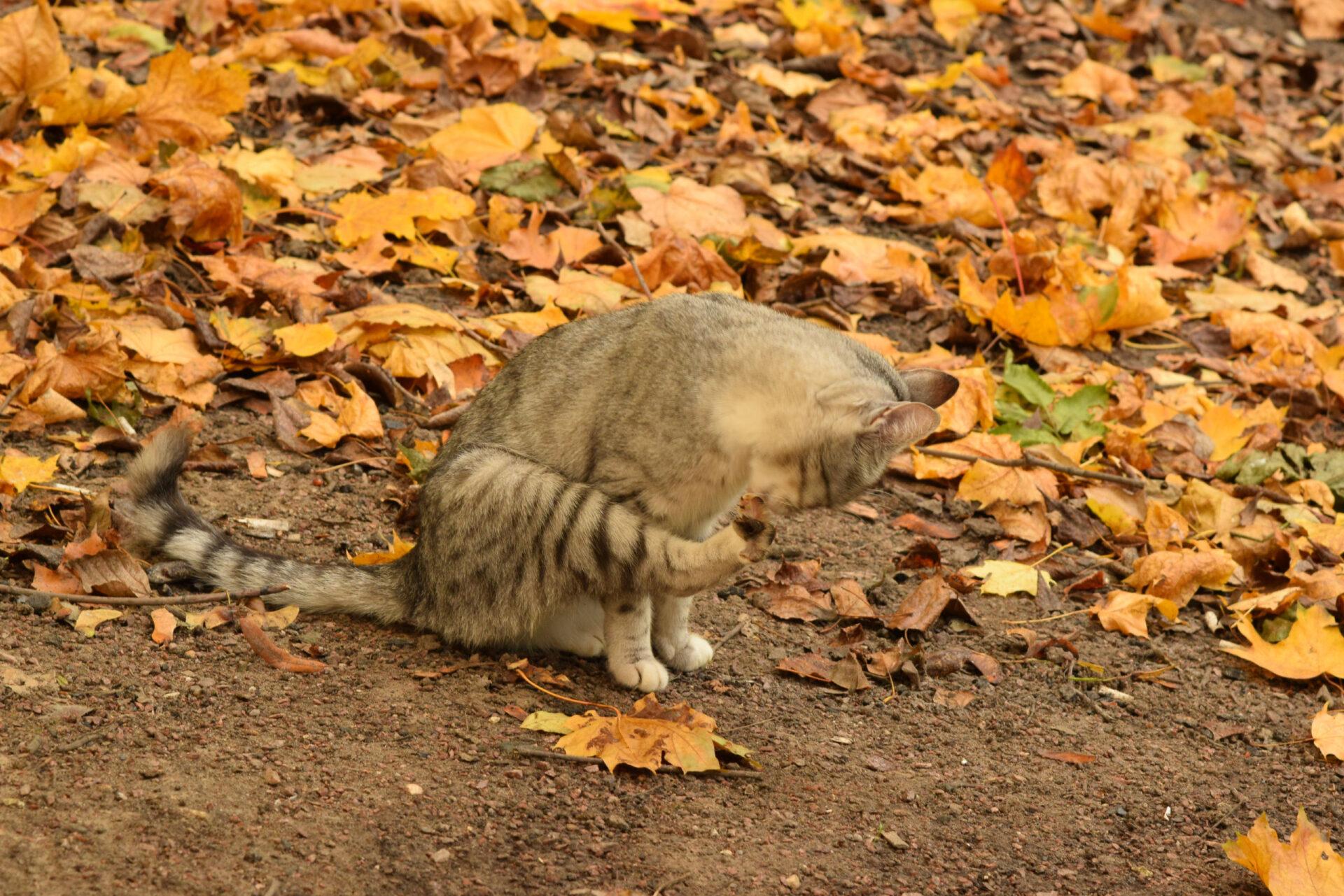 Осенние Борисовские пруды