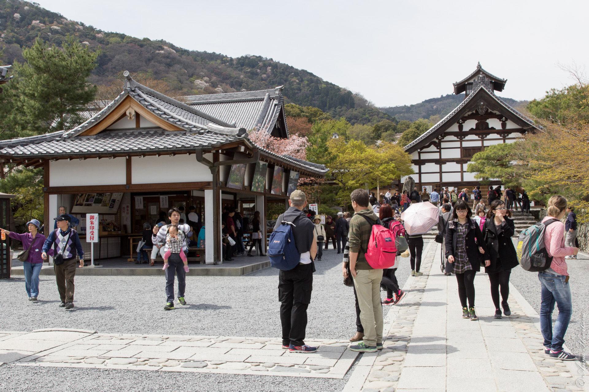 Прогулки поКиото: Жизнь ввишневом цвете