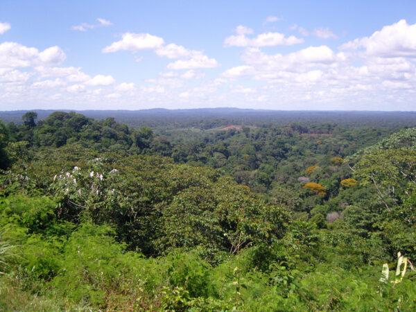 Южноамериканский Перчик— Cayenne