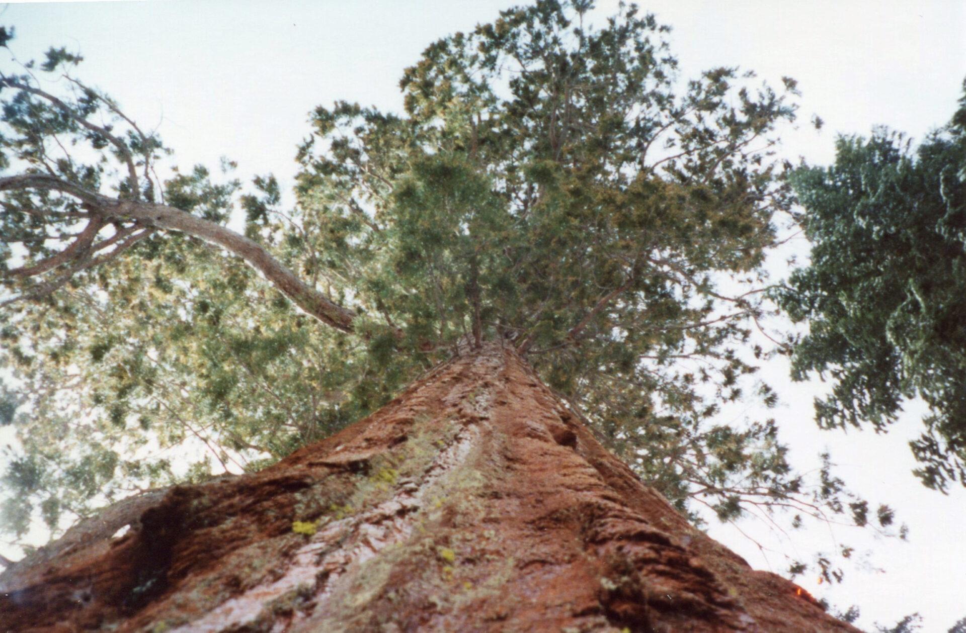 Калифорния. Часть 1. Национальный парк Йосемити.