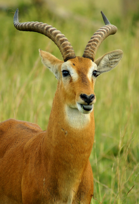 Африка— любовь моя. Животный мир Танзании.