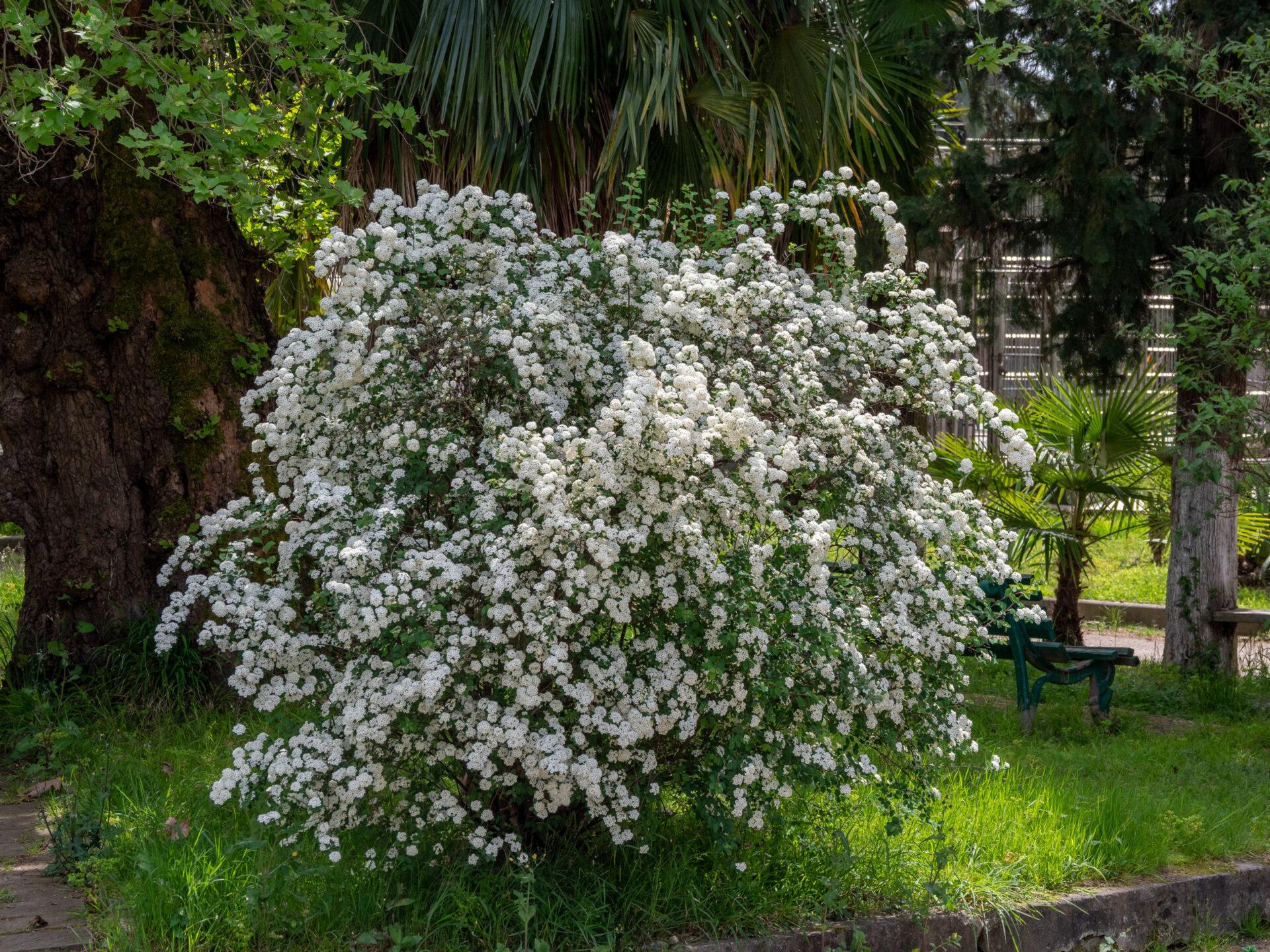 Абхазия. Сухумский обезьяний питомник