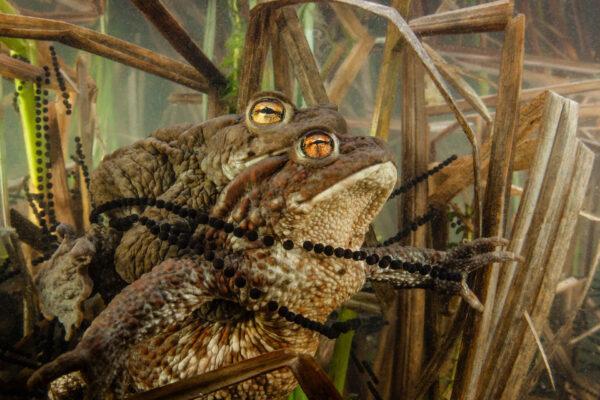 Конкурс фотоанималистики «Золотая черепаха»
