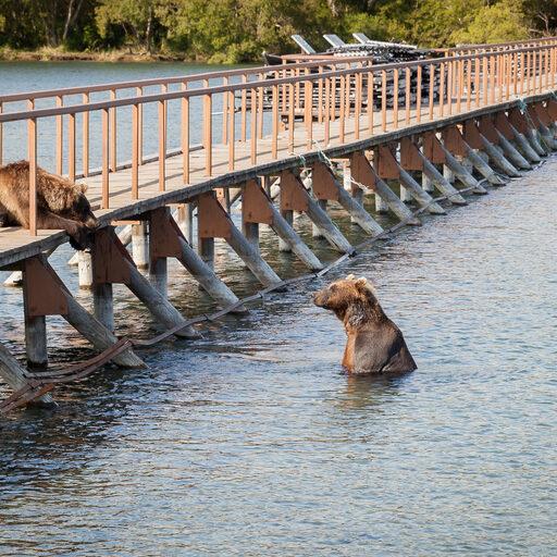 Курильское озеро. Обнимашки с медведями