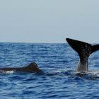 Мирисса-порт, киты ипляж.