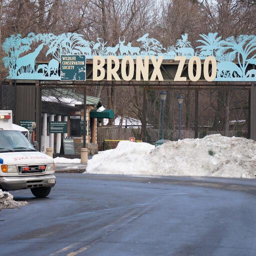 Bronx ZOO в Нью-Йорке после Снегзиллы. Бесплатное посещение