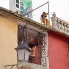Куба напоминает осебе