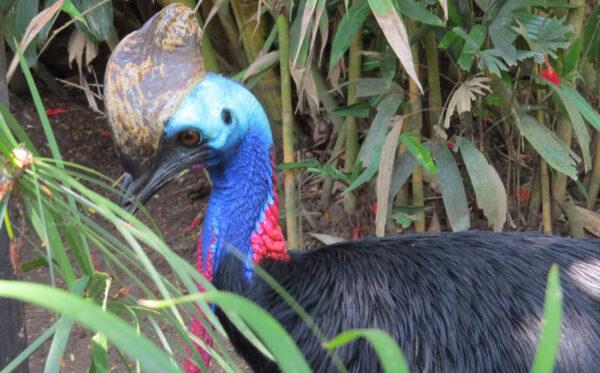 Парк птиц, Бали
