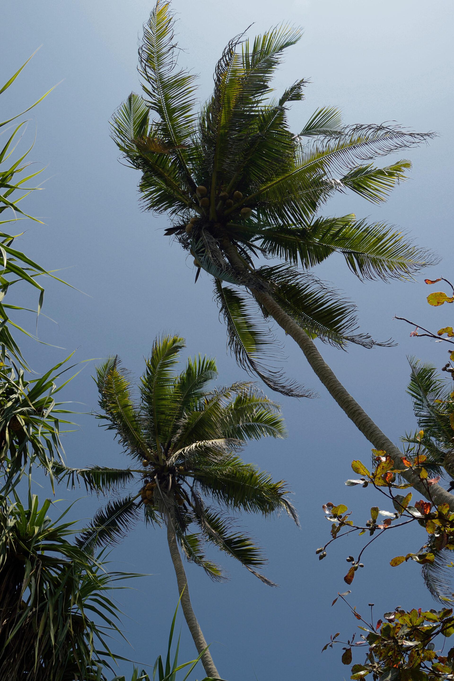Сказочный Цейлон